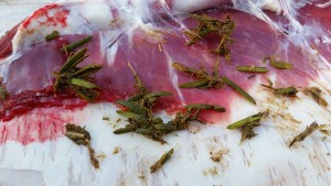 Yew leaves and twigs found in the rumen of a heifer on necropsy (animal autopsy).