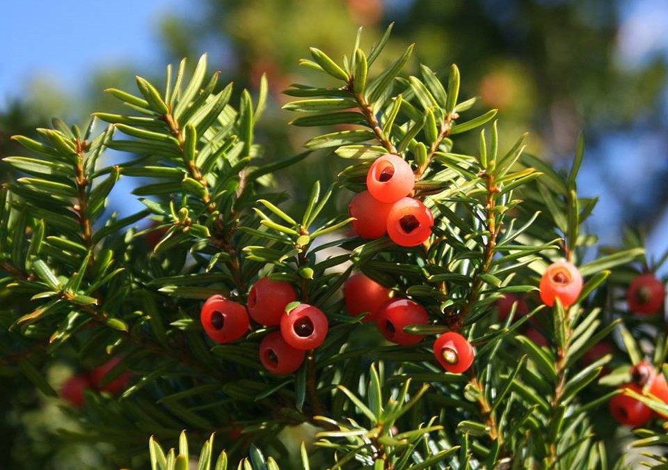 "What should ""Yew"" be worried about?"